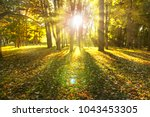 beam of light through trees ... | Shutterstock . vector #1043453305