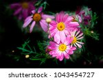 two large pink and purple... | Shutterstock . vector #1043454727