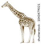 vector antique engraving... | Shutterstock .eps vector #1043479021