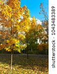 autumn tree with fallen dry... | Shutterstock . vector #1043483389