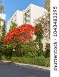 modern urban floristics of... | Shutterstock . vector #1043483395