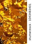 colorful autumn leaves | Shutterstock . vector #1043483401