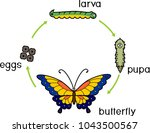 life cycle of butterfly.... | Shutterstock .eps vector #1043500567