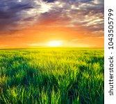 green summer rural field at the ... | Shutterstock . vector #1043505799