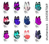 beautiful  butterfly collection ... | Shutterstock . vector #1043587069