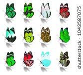 beautiful  butterfly collection ... | Shutterstock . vector #1043587075