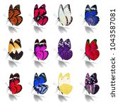 beautiful  butterfly collection ... | Shutterstock . vector #1043587081