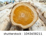 Small photo of Cut in trunk of Teak wood tree stump with cracks and age rings : Annual ring of a big tree close up