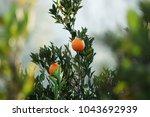 mediterranean orange garden. ... | Shutterstock . vector #1043692939
