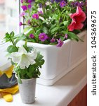 Decoration of balcony petunia in white and plastic flower pot - stock photo