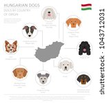 dogs by country of origin.... | Shutterstock .eps vector #1043712031