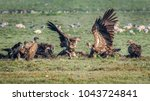 a flock of vultures  the two... | Shutterstock . vector #1043724841