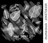 hand drawn doodle vector mint... | Shutterstock .eps vector #1043726104