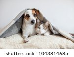 Stock photo dog and cat together dog hugs a cat under the rug at home friendship of pets 1043814685