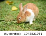 Stock photo rabbit on fresh green grass little gray rabbit on green grass background flowers are blooming in 1043821051