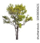 collection of isolated trees on ...   Shutterstock . vector #1043830621