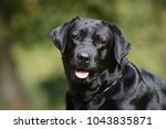 healthy purebred dog... | Shutterstock . vector #1043835871