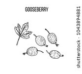 berry hand drawn collection ... | Shutterstock .eps vector #1043894881