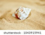 shells on the sand | Shutterstock . vector #1043915941