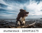happy dog puppy pet playing... | Shutterstock . vector #1043916175