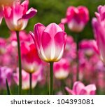 beautiful spring flowers. | Shutterstock . vector #104393081