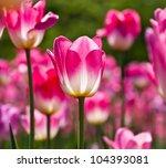beautiful spring flowers. | Shutterstock . vector #104393081