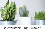 collection of various cactus...   Shutterstock . vector #1043935357