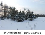 a forest in winter  a christmas ...   Shutterstock . vector #1043983411