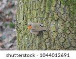 A Robin On The Bark