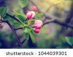 Buds Of Flowers On A Branch In...