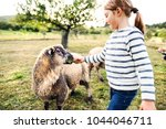 a small girl feeding sheep on... | Shutterstock . vector #1044046711