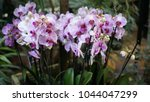 beautiful blooming orchid... | Shutterstock . vector #1044047299