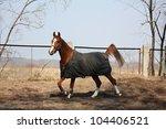Horse In Coat Running In The...