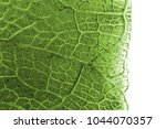 Micro Photo Of Leaf Texture As...