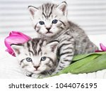 Stock photo lovely kittens with tulip flowers 1044076195