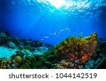 underwater world coral reef... | Shutterstock . vector #1044142519
