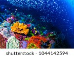 Stock photo underwater life landscape fish shoal at coral reef ocean underwater 1044142594