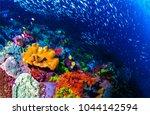 Coral Reef Beautiful Underwater ...