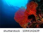 underwater sea sponge landscape | Shutterstock . vector #1044142639