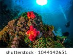 underwater world landscape | Shutterstock . vector #1044142651