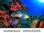 Underwater Sea Turtle Landscap...