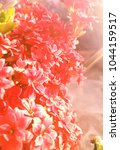 flowers background and textures ... | Shutterstock . vector #1044159517