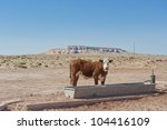 Lone Agricultural Cow Standing...
