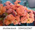 flowers background and textures ... | Shutterstock . vector #1044162367