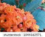 flowers background and textures ... | Shutterstock . vector #1044162571