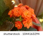 flowers background and textures ... | Shutterstock . vector #1044163294