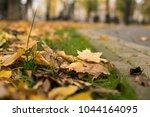 background group autumn orange...   Shutterstock . vector #1044164095