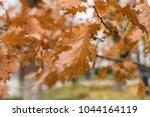 autumn leaves on the pedestrian ...   Shutterstock . vector #1044164119