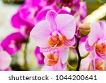 pink phalaenopsis orchid or...   Shutterstock . vector #1044200641