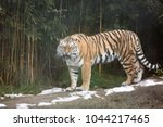 the roaring tiger  the... | Shutterstock . vector #1044217465